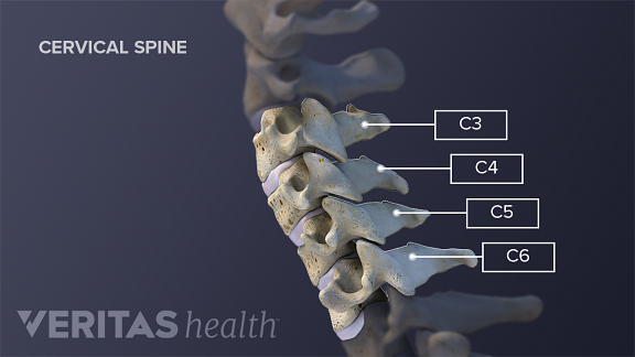 C3, C4, C5, and C6 cervical vertebrae.