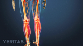 Medical illustration of a skeleton. The shins are highlighted in red.