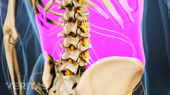 Posterior view of the lower back highlighting the back muscles.
