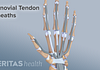 synovial tendon sheaths