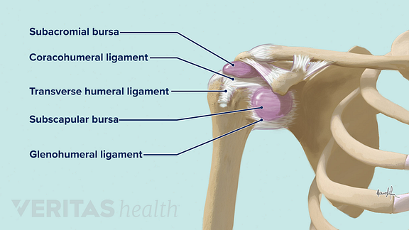 Illustration of the shoulder ligaments and bursae