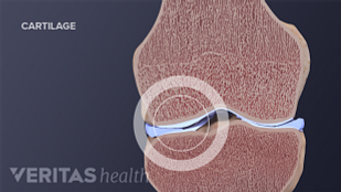 illustration of normal knee cartilage