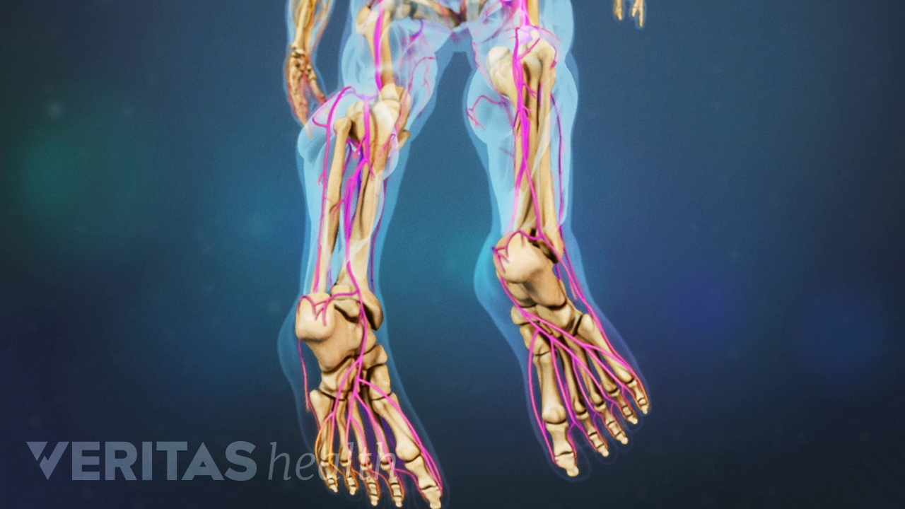 Inferior view of the skeletal and nervous system from the bottom of the feet.