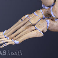 Profile view of the foot and leg showing the bones of the ankle joint