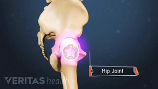 Profile view of the pelvis labeling the hip joint