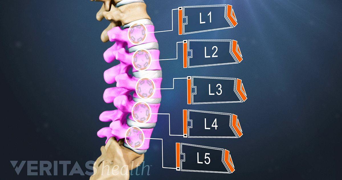 Dolor y anatomía de la columna lumbar