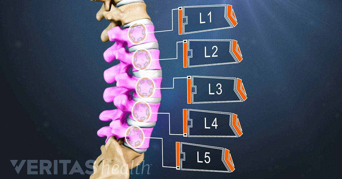 The Basics Of Back Pain And Spinal Anatomy