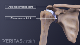 Medical illustration of the shoulder bones with the acromioclavicular (AC) joint and glenohumeral joint labeled