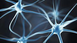 Closeup of neurons in the brain