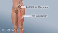 All about the L4-L5 Spinal Segment