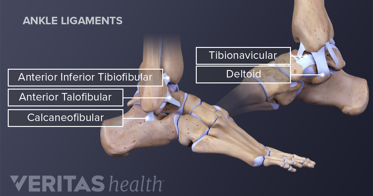 Ankle Sprain And Strain Signs And Symptoms