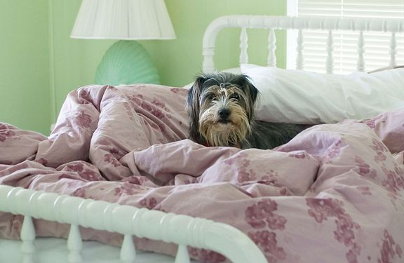 Bed with dog in it