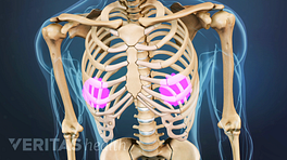 Anterior view of the chest with thoracic spine and ribs.