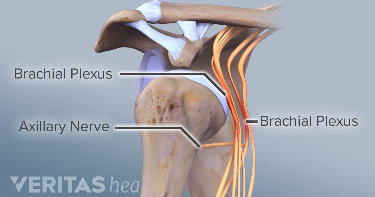 brachial neuritis treatment and prognosis, Skeleton