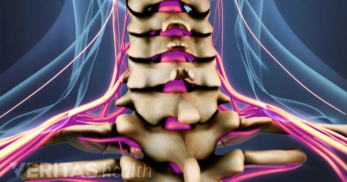 Spinal Cord Anatomy In The Neck