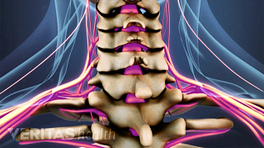 Medical illustration of the spinal cord and nerves in the cervical spine
