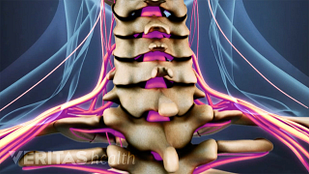 Animated video still of the spinal cord and nerves in the cervical spine