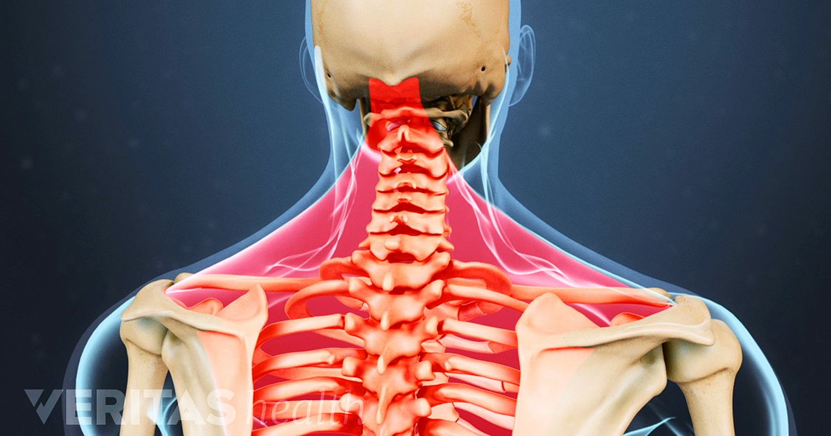 cervical spine anatomy video, Human Body