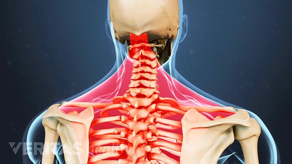 Cervical Muscles