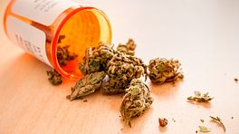 Prescription bottle with medical marijuana tipped over on a table