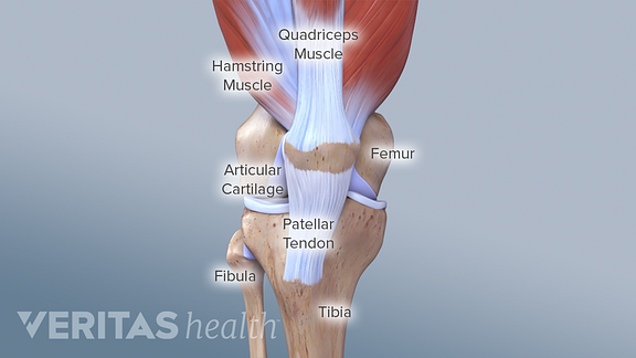 Knee Anatomy Arthritis Health