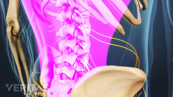 lumbar spine and muscles