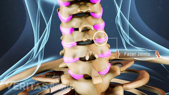 cervical facet joints