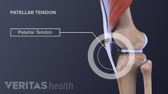 Knee Anatomy