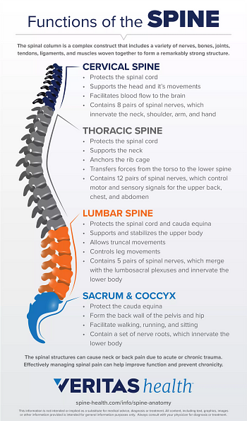 Infographic Showing the Functions of the Spine