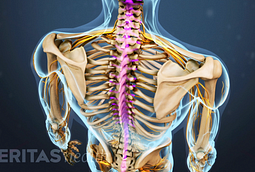 Concussions, spinal cord injuries, and nerve root injuries may occur at the same time as a stinger injury.