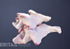 two cervical vertebrae with bone spurs