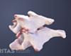 two cervical vertebrae with bone spurs