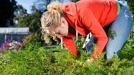 Gardening with Back Pain