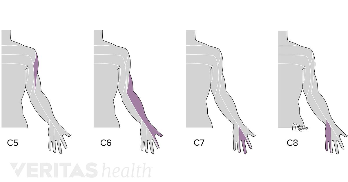 Cervical Spinal Nerves