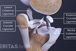 knee soft tissue