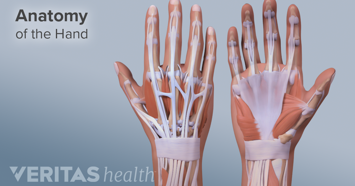 Carpal Tunnel Syndrome Vs  Soft Tissue Inflammation