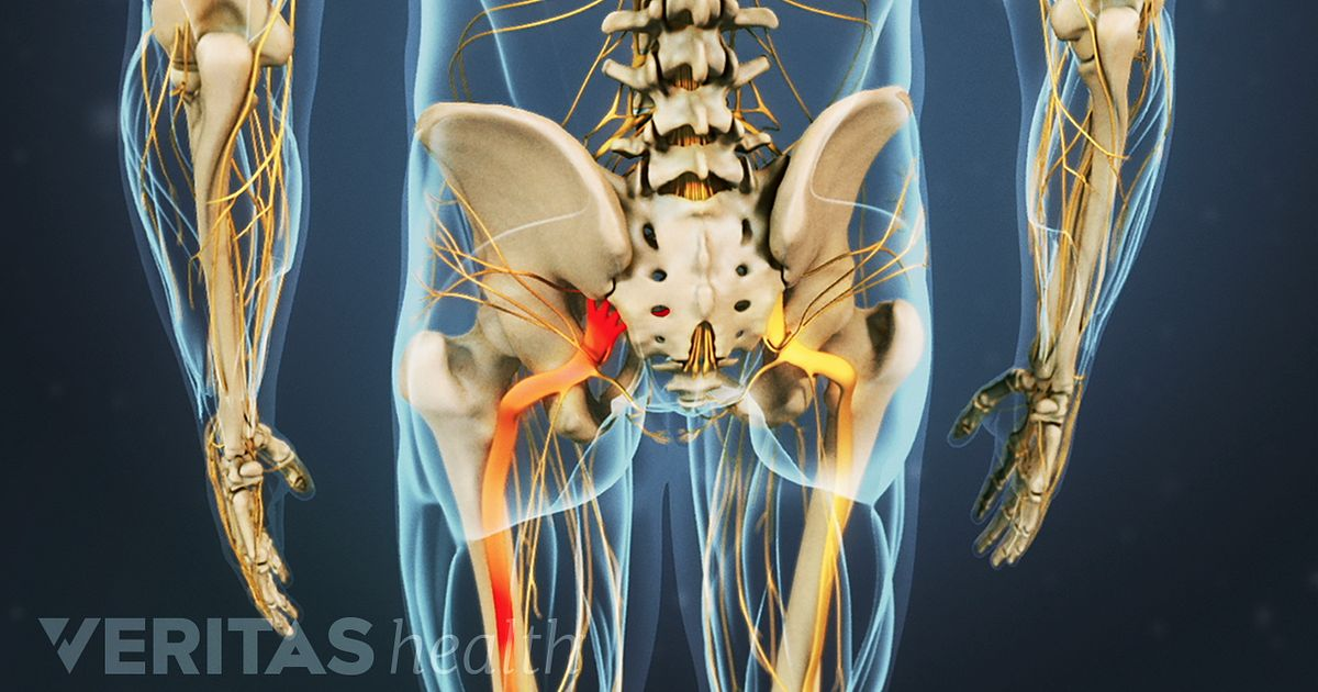 sciatic nerve anatomy - Selo.l-ink.co