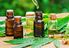 Image of sever CBD oil tinctures for chronic pain