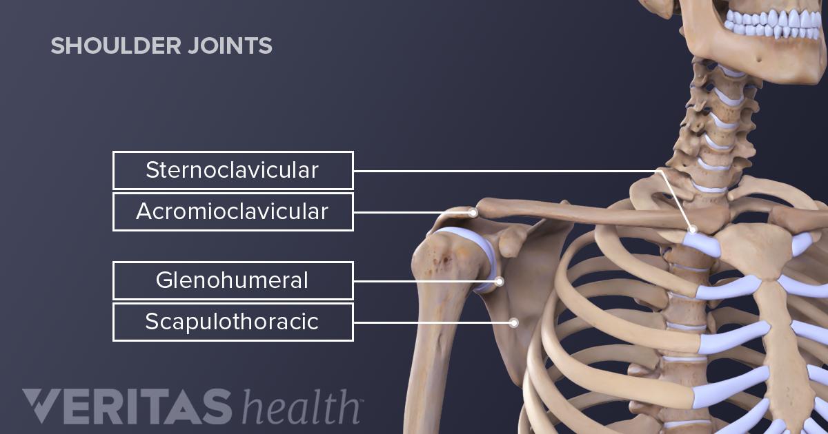 Shoulder Joint Structure