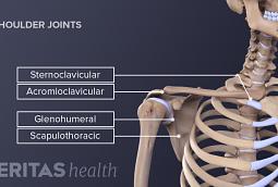 Medical illustration of the four joints of the shoulder.