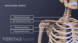 Medical illustration of the four joints of the shoulder Sternoclavicular, acromioclavicular, glenohumeral, and scapulothoriacic are labeled..
