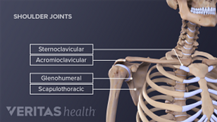 Medical illustration of the four joints of the shoulder.
