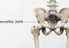 Anterior view of the pelvis highlighting the SI joint.