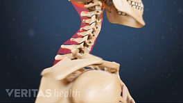 Side view of the cervical spine