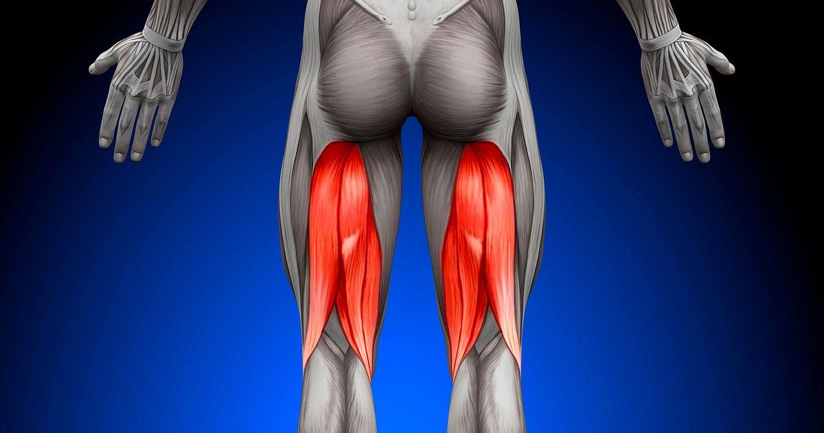 【膝に痛みや違和感があるときに】この筋肉をほぐしてみよう【第四弾 ハムストリングス】