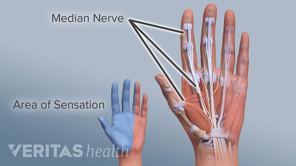9b2d45b79c9 Myth: Any hand pain or tingling is a sign of carpal tunnel syndrome,  especially if you use a computer all day.