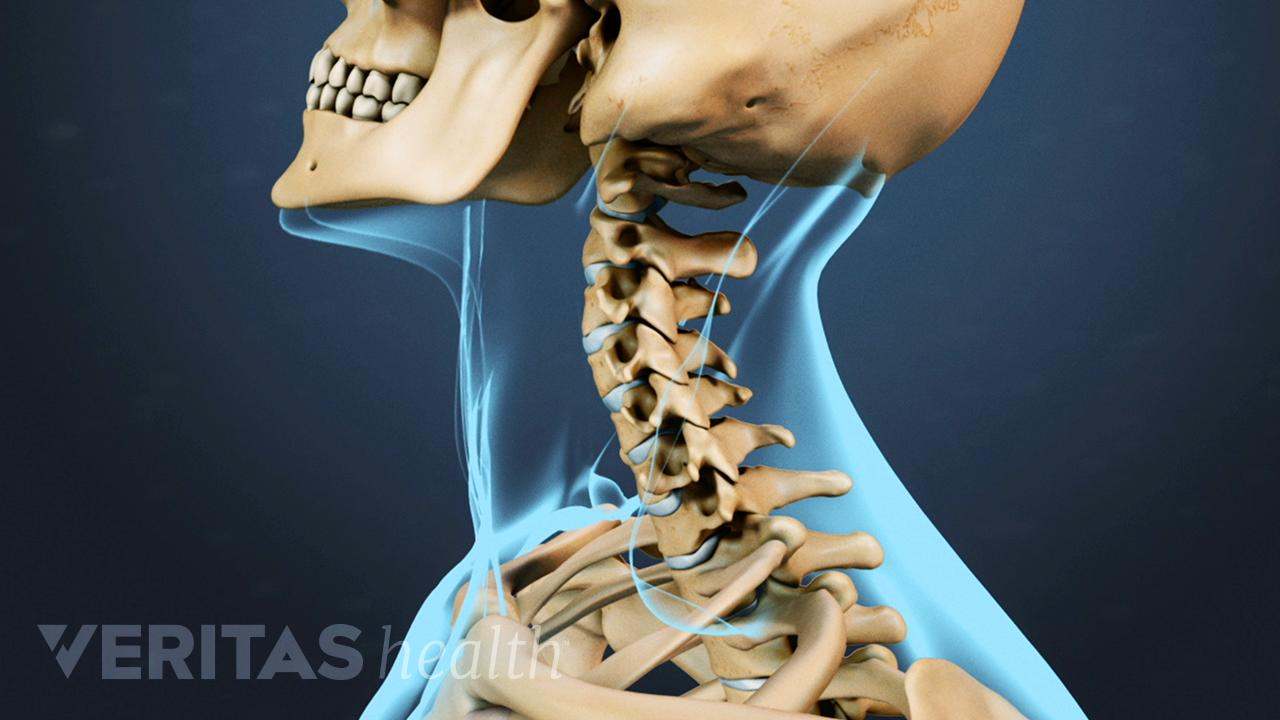 Profile view of cervical spine range of motion