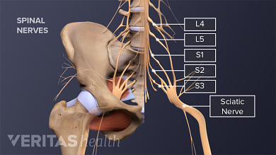 My Sciatic Nerve is Killing Me'...Cause, Symptoms and Care - Elmira Family Chiropractic
