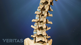 Posterior view of the lumbar spine showing curvature.