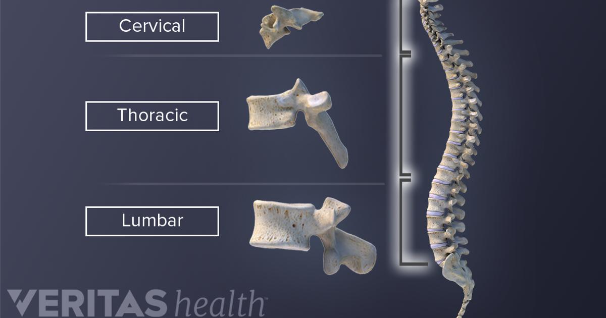 Spine Anatomy And Osteoarthritis